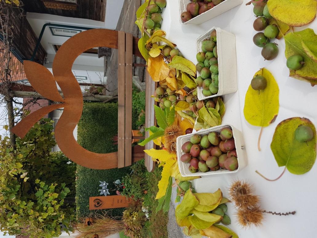 Kiwibeere Superfood Obstbau Knaller