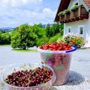 Obstbau Knaller Kirschen