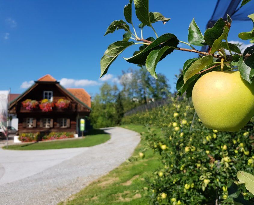 Obstbau Knaller Golden Delicious