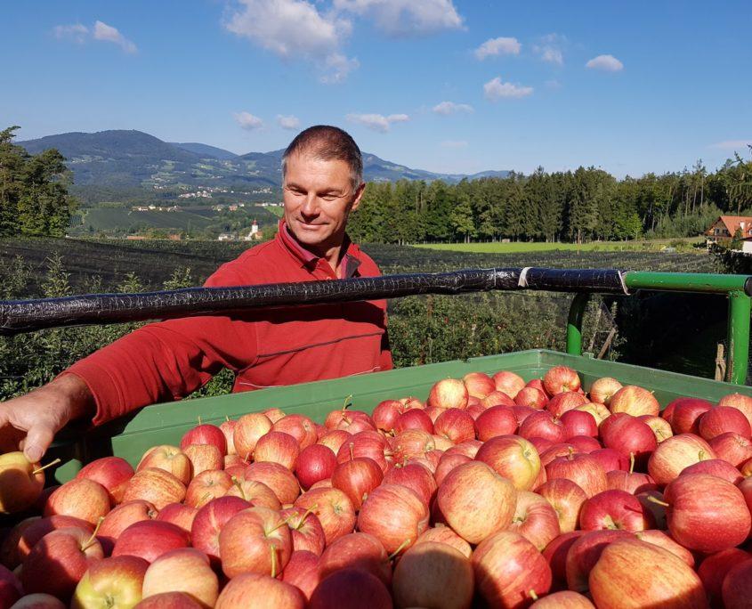 Obstbau Knaller Josef bei der Apfelernte